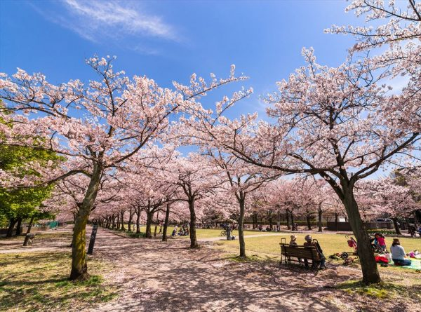 cherryblossom_viewing_04